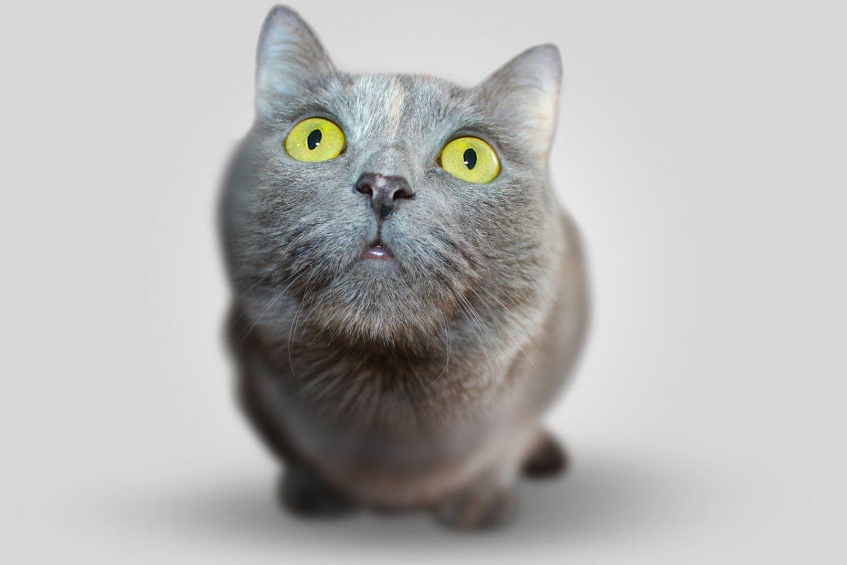 Animal de estimação doente? 6 dicas para cuidar do seu animal